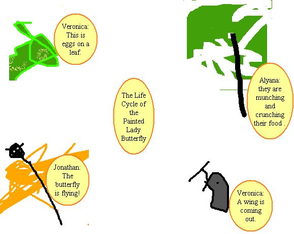 Painted Lady Life Cycle Diagram
